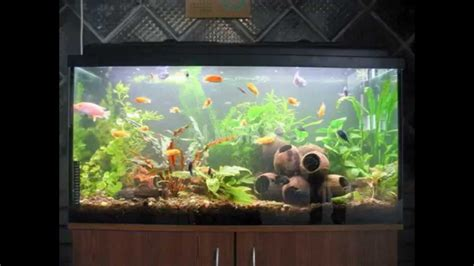 aquarium decoration ideas freshwater freshwater aquarium decoration ideas www imgkid