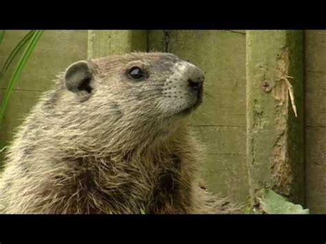 groundhog day xplor hqdefault jpg