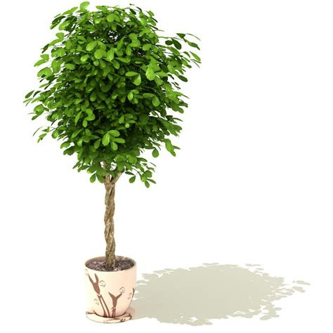 potted tree green potted tree 3d model cgtrader