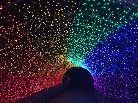 zoo festival of lights show your cincinnati pride vote for cincinnati zoo