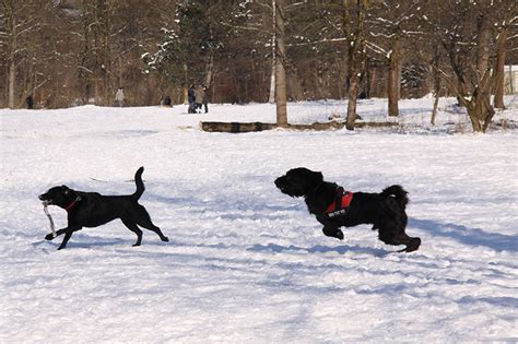 Englischer Garten München Parkmöglichkeiten by Hundewiesen In Und Um M 252 Nchen K 246 Rbchen 174