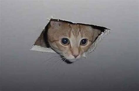 cat paper craft ceiling cat papercraft