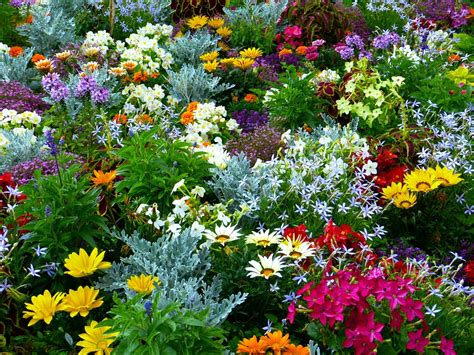 flower garden photo free photo flower garden garden flowers free image on