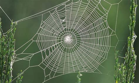 les toiles d araign 233 es poss 232 dent un pouvoir d attraction secret pour attraper leurs proies