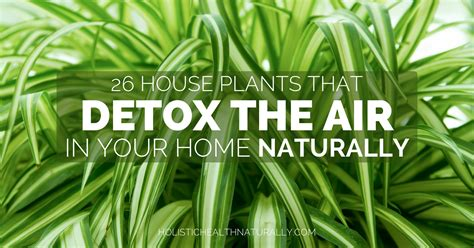 house for plants 26 house plants that detox the air in your home naturally