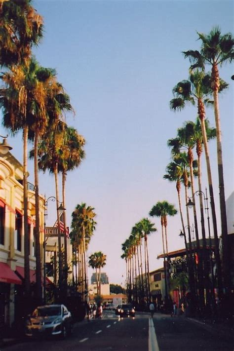 live trees los angeles 25 beautiful california palm trees ideas on