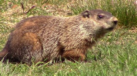 how to groundhog day groundhog day 2017