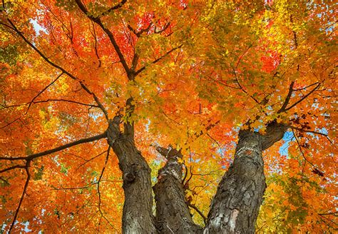 maple tree zone best trees for drought areas drought tolerant trees by zone