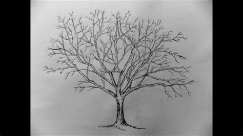 how to draw a realistic tree step by step how to draw a tree with pencil step by step