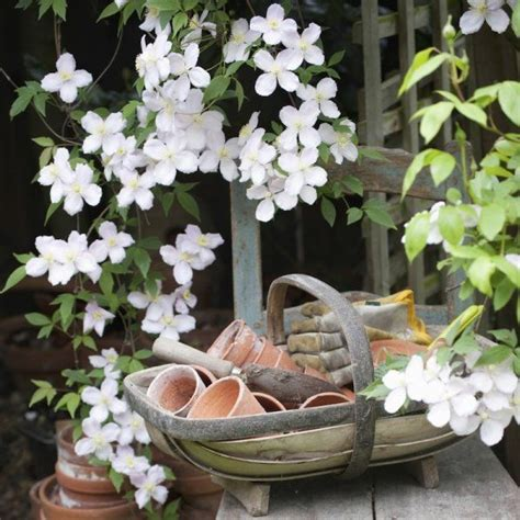 les 25 meilleures id 233 es concernant plantes grimpantes sur fleuraison de la vigne
