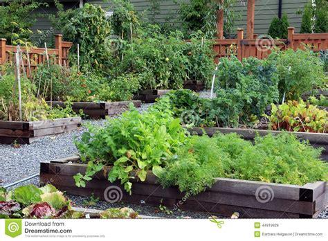 community vegetable garden community vegetable garden
