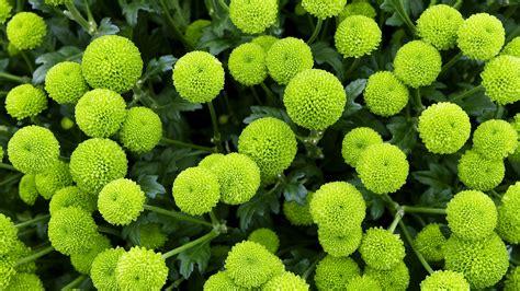 green garden flowers plants flowers trees garden nature earth green wallpaper