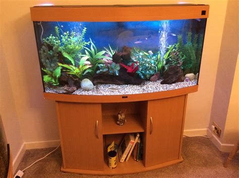 juwel vision 260l in beech tropical fish site