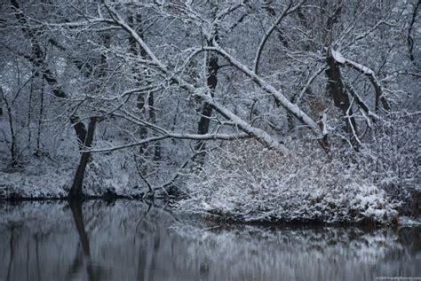 winter trees winter trees