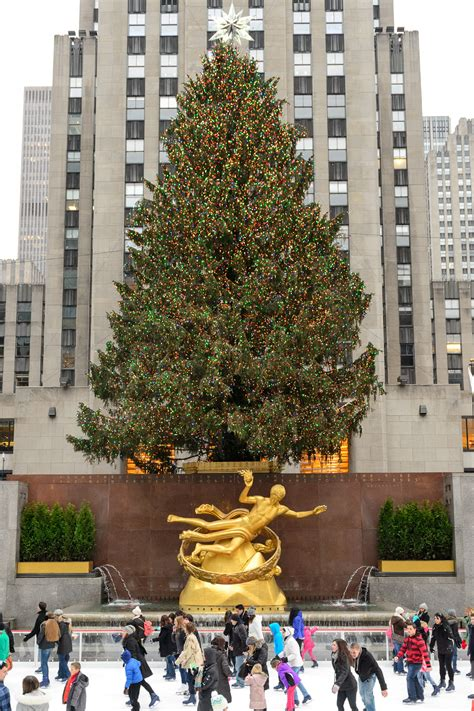 rockefeller center tree photos rockefeller center tree guide plus what to do nearby