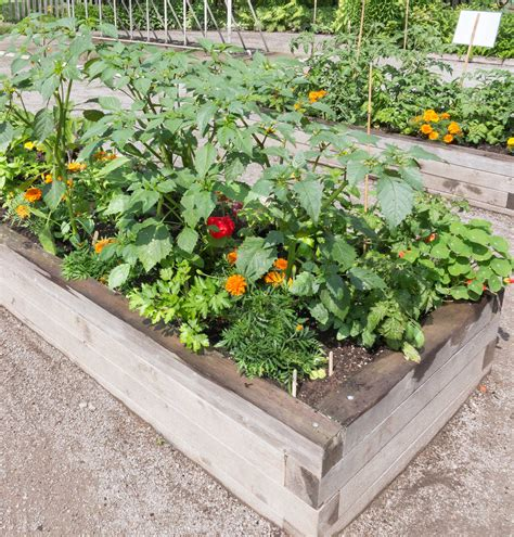 tips for planting a vegetable garden timing