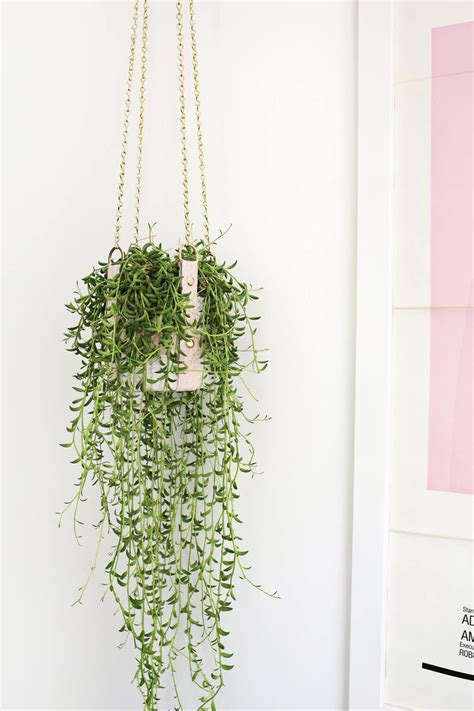 hanging plant best 25 hanging plants ideas on hanging plant