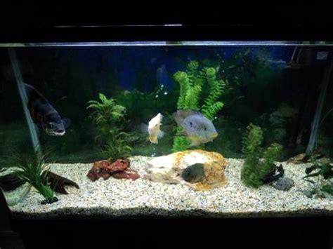 aquarium decoration ideas freshwater freshwater aquarium design ideas