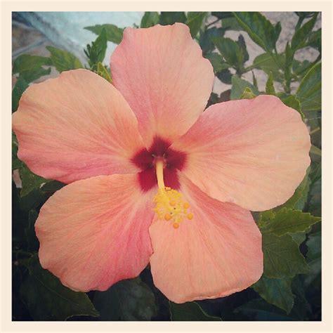 acid flower flower by acid flower on deviantart