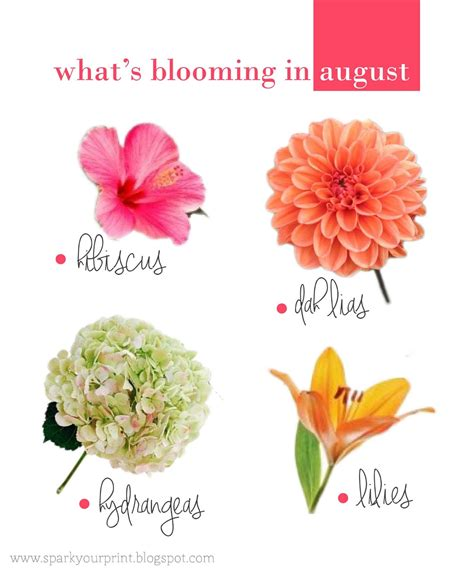beautiful flowers names and pictures pretty flowers names and pictures beautiful flowers