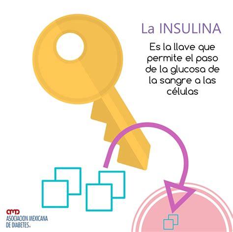alimentos con insulina que es la insulina diabepedia