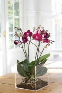 les 25 meilleures id 233 es de la cat 233 gorie orchid 233 es sur