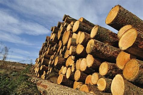 woodworking resources pros and cons renewable and nonrenewable energy resources