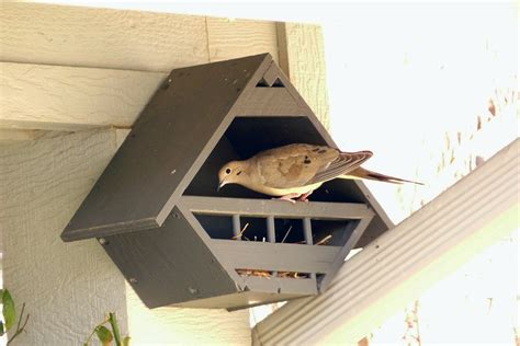 mourning dove house plans doves their lovey dovey birdhouses feathers