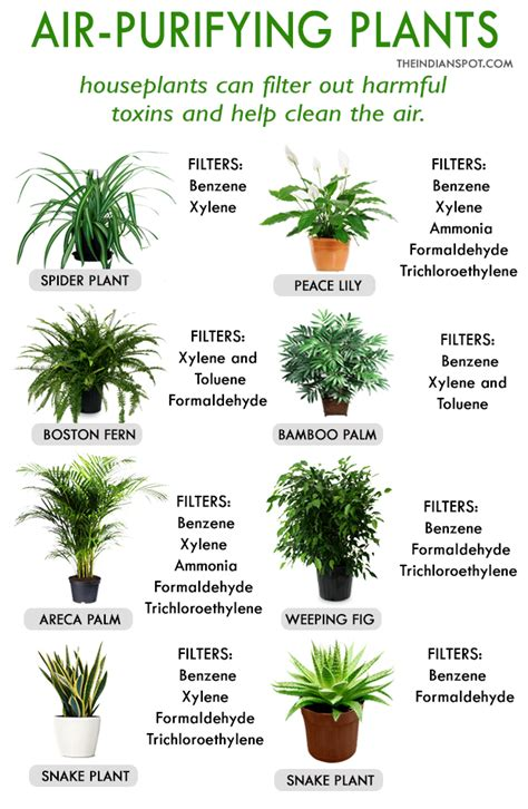 house for plants best house plants for clean air and better health