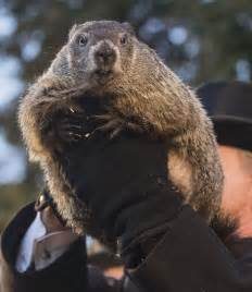 groundhog day of groundhog day is the dumbest american for the win