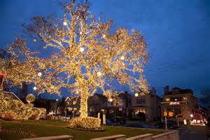 tree with big lights yard archives bless my weeds