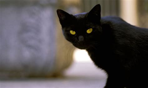 witches cat your stories the witch by sugar children s
