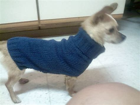 chihuahua sweater knitting pattern 17 best images about chihuahua on