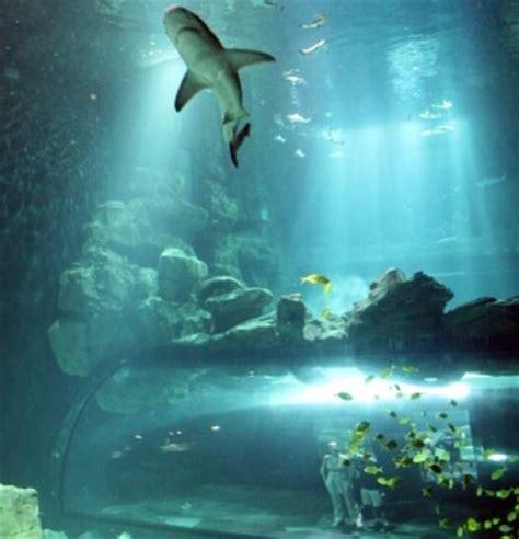 aquarium de cineaqua παρίσι κριτικές από aquarium de cineaqua tripadvisor