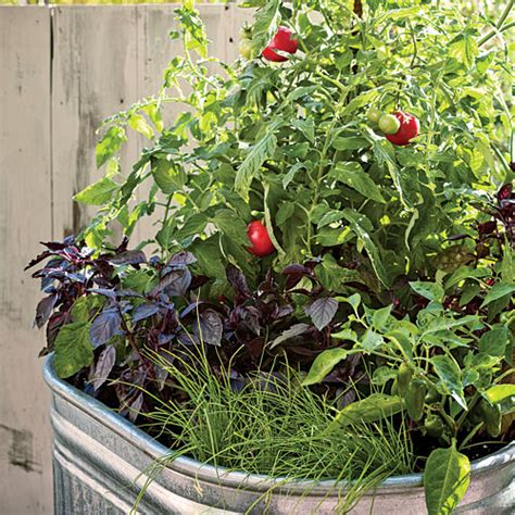 container gardens vegetables single container vegetable garden sunset