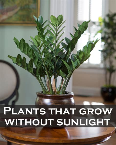 which plants can survive without sunlight the best 28 images of which plants can survive without