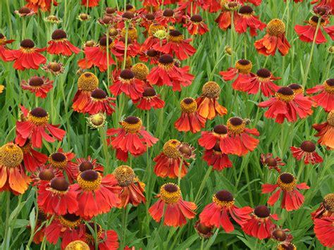 garden flowers perennials perennial flowers plants hgtv