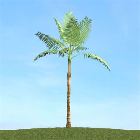 tropical tree tropical palm tree 3d model cgtrader