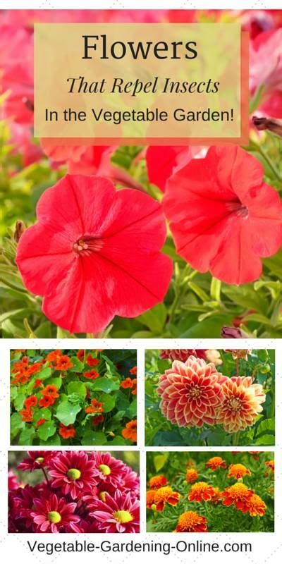companion flowers for vegetable garden 25 best ideas about vegetable garden layouts on