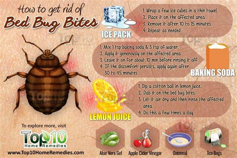 Get Rid Of Bed Bugs Fast by How To Get Rid Of Bed Bug Bites Top 10 Home Remedies