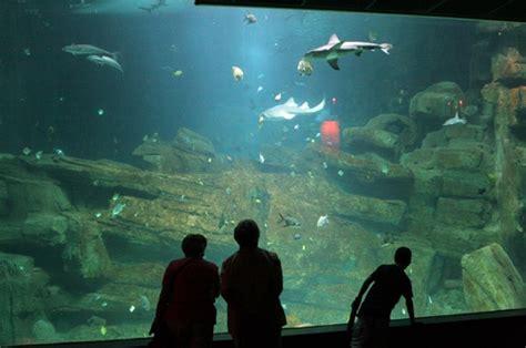 cin 233 aqua aquarium du trocad 233 ro photo l aquarium du trocad 233 ro