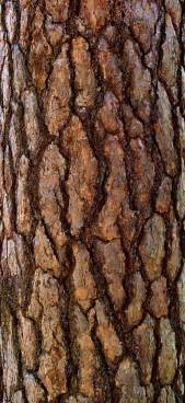 tree brown 25 best ideas about textures patterns on