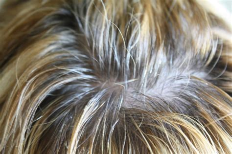 high lighted hair with gray roots coloring roots on highlighted hair hairstylegalleries com