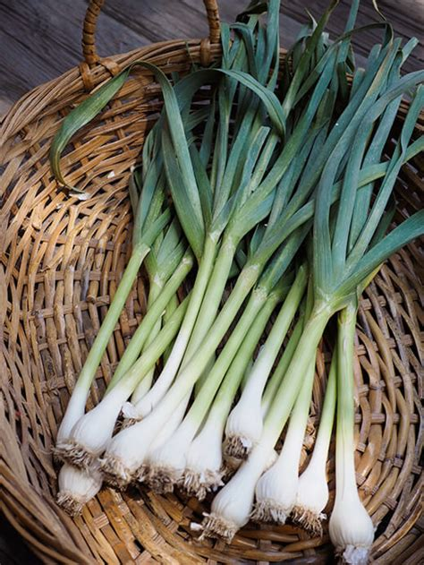 Gardeners Supply Garlic Growing And Harvesting Green Garlic Garden Betty