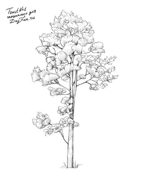 how to draw a realistic tree step by step how to draw realistic pine trees step by step arcmel