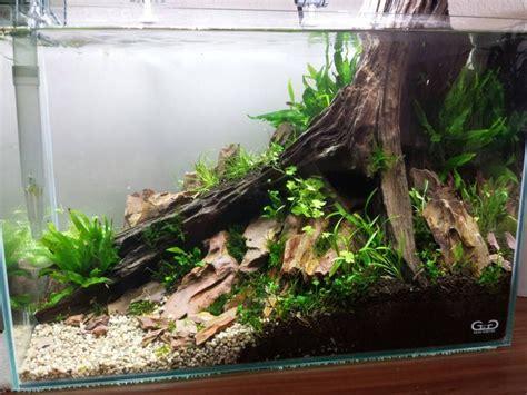 aquarium decoration ideas freshwater 161 best images about fish tank on