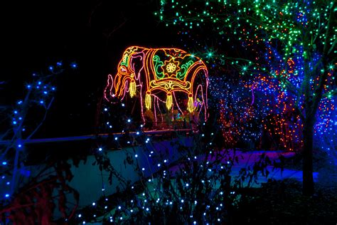 zoo lights denver zoo s zoo lights shines as bright in 2015