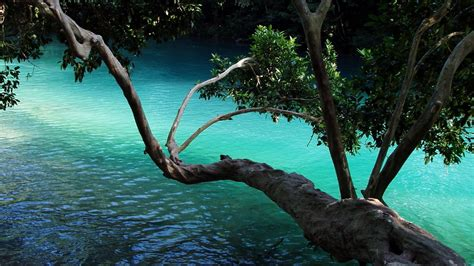 tree water tree branch water high definition wallpapers hd