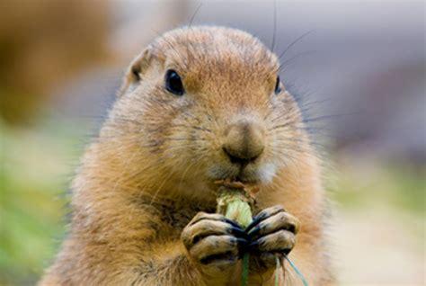 groundhog day of groundhog day 2017 feb 02 2017