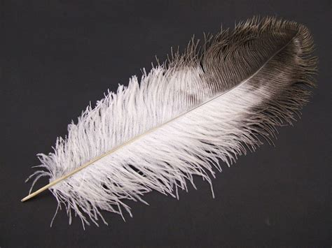 feather with ostrich feathers large feathers for costumes decorations